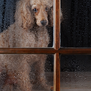 The so-called POODLE flaw is dangerous for browsers, but only those that aren't up-to-date.